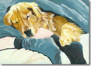 golden_retriever_sleeping