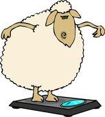diet-sheep