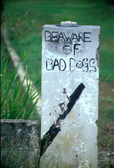 bad dog and bad speller