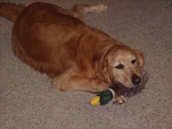 home is where my duck is