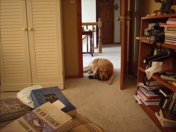 Finish studying then you might want to clean that bookcase Mom!