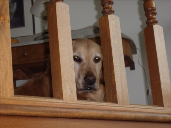 Will you bring me a cookie when you come back upstairs?