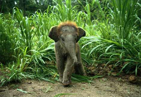asian-elephant-baby
