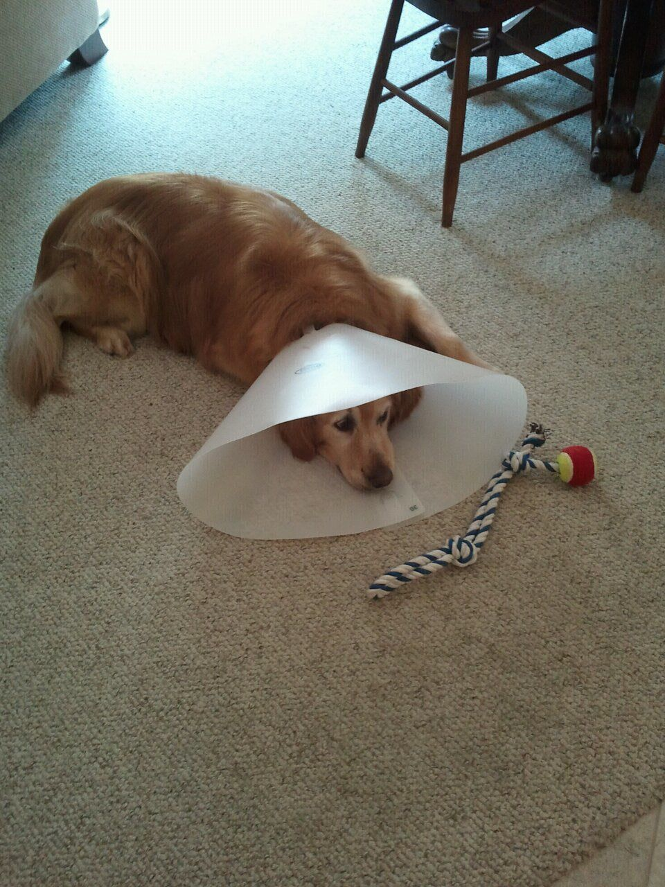 how to have fun while your dog is wearing the cone of shame or